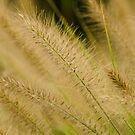 Grass by vasu