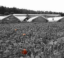 The Pumpkin Patch by Rebecca Brann