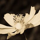 Flower in BW by vasu