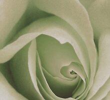 Floral Beauty Calendar by patjila
