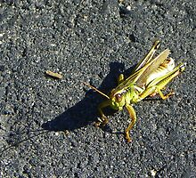 Uncertain Grasshopper by MaryinMaine