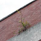A Tree Grows Through Building!! by Cathy Cale