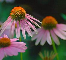 echinacea and a beautiful blur... by dabadac