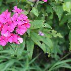 R3 - fuchsia flowers by Christina Adams