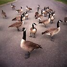 Geese VS Holga by jrphotography05