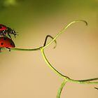 Leap frog by Heather Thorsen