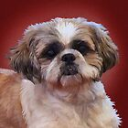 Shih Tzu Dog by Sarahbob
