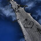 Tree Love by Chad Ely