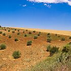 olive grove, andalucia by mortonboy