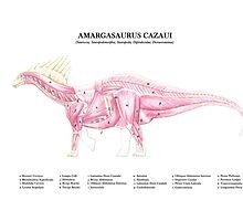 Amargasaurus Cazaui - Muscular study by A V S TURNER