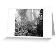 Eucalypti of Mount Sutro Greeting Card