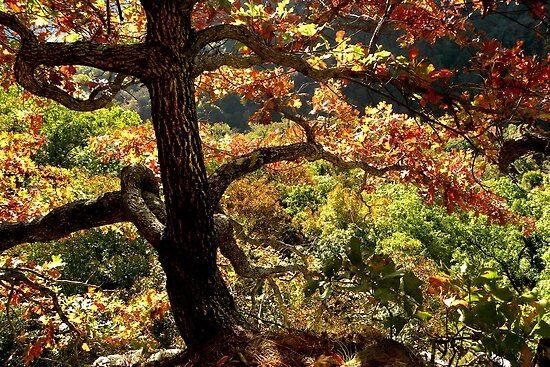 Hanging On The Edge by NatureGreeting Cards ©ccwri