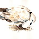African Collared Dove by Louise De Masi