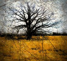 Desolate III by Gal Lo Leggio
