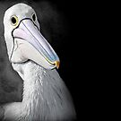 A Study - Pelican Series by Tainia Finlay