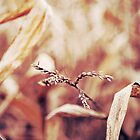 Autumn in Cornfields by Krisztian Sipos