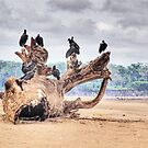 Black Vultures Congregating Along the Amazon by Edith Reynolds