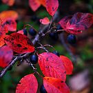 Glorious Autumn Colours #2 by goddarb