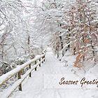 Winter path by cards4U