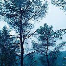Pinetree Blues by Noam Gordon