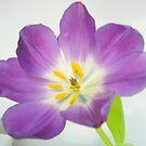 Pretty Purple by Nicki Baker