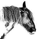 Gypsy Horse by oconnart