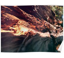 The Wooden Canyon Poster