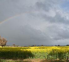 Rainbow Over Canola by GailD
