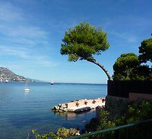 Mediterannean Pine by Fara