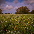 Field of flowers by ajgosling