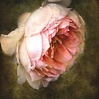 Summer&#x27;s last rose by Chris Armytage