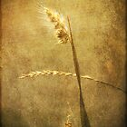 Sighing of Changes ... (Summer Grasses IV) by Chris Armytage