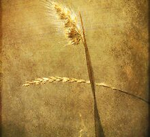 Sighing of Changes ... (Summer Grasses IV) by Chris Armytage™