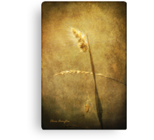 Sighing of Changes ... (Summer Grasses IV) Canvas Print