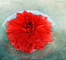 Red Dahlia Offering by Lynn Starner