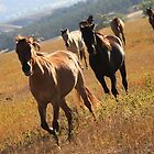 Wild Mustangs by Kate Purdy