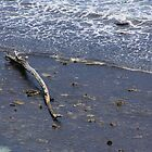 Driftwood by dsimon