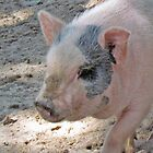 Sweet Piggy by Cynthia48
