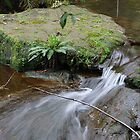 Silky Flow - Leura Cascades NSW Australia by Bev Woodman