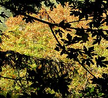 Harvest Gloom Frond  by StevenVierra