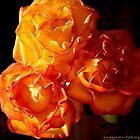 three orange roses for an angel by AnnaJameson