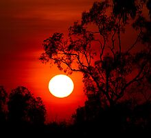 Sunset near Barkly Homestead N.T by Steve Bass