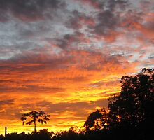 Morning Glory (Sunrise) - Kennedy, North Queensland, Australia by myhobby