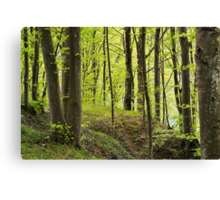 The forest along the Rhone river Canvas Print