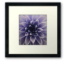 Cyanotype Dahlia Framed Print