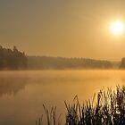 From Dusk to Dawn by Kasia Nowak