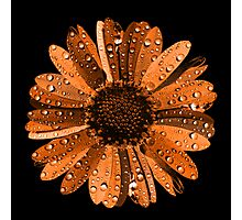 Orange flower with water drops Photographic Print