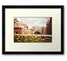 Flowers Along the High Line - New York City Framed Print