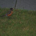 Little bird by dsimon