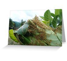 GreenAnts working together - Kennedy, North Queensland, Australia Greeting Card